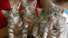 IMAGE: Uber to deliver kittens Thursday