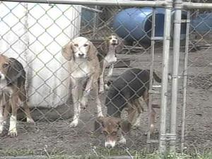A controversial dog abuse case in Wilson County prompted more questions for commissioners Tuesday night.