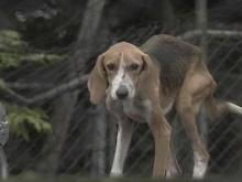 Dog Owner Faces Animal Abuse Charges