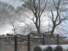 Heavy Rain Fails to Make Dent in Stump Dump Fire
