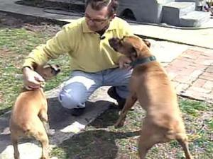 Three of Enrique Poorua's dogs died in late November after eating poisoned meat.