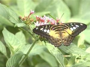 State Cites Butterfly House Use of Pesticide
