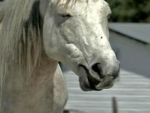 Girl, Horse Fend Off Pit Bull Attack