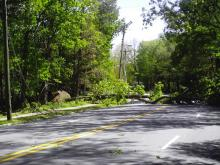 Heavy winds in Chapel Hill on Monday, April 16, tied up local authorities with traffic duties as trees closed some streets and downed power lines darkened several traffic lights.