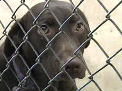 "A bill that has passed the state Senate and gone to the House would require owners of dogs officially deemed ""dangerous"" by new county boards would have to be able to post a bond or show they have insurance for up to $5,000 in damages."