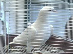 Some students in Cumberland County found their guardian angel flew the coop and arrived at a school in Hope Mills.
