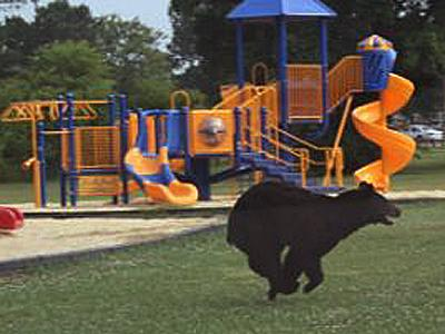 A 300-pound black bear was spotted earlier this week near a playground in Goldsboro.