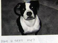 Nicomma Locklear of Cary posted flyers of his missing dog, Mikey, who ran away on the Fourth of July.