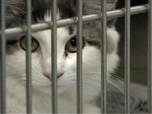 N.C. Debates Humane Way to Euthanize Animals