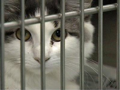 Animal rights advocates said that North Carolina's continued use of gas chambers to euthanize animals is barbaric.