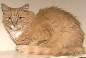 The feline Dagney was reunited with his owner with the help of strangers and of a microchip.