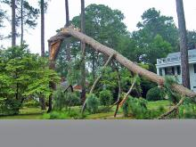 Goldsboro Storm Damage