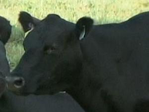 Cattle Farmers Facing 'Hay Emergency'
