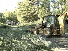 Fallen Tree Stumps Raleigh Motorists