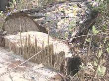 Utility Contractor Cuts Through Protected Woods