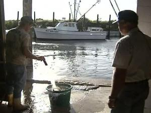 North Carolina is in a five-year downward spiral when it comes to commercial fishing.