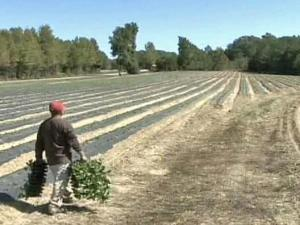 Farmers Find 'Ingenious' Ways to Get Water