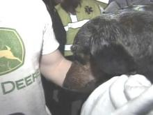 Firefighters rescued this black Dachshund, who was wet and smoky but unhurt.