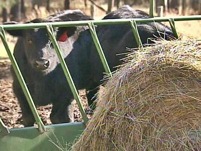 The 2007 drought cost North Carolina livestock farmers an estimated $91 million in hay and pasture crop.