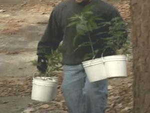 Marijuana plants are carried out of the house at 5401 Alpine Dr. Saturday morning.