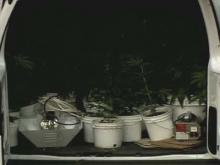 Pot Plants Confiscated at House Where Wanted Felon, Deputy Were Shot