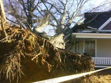 Storm Leaves Downed Trees, Damage