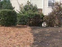 Should Pine Straw Be Banned Around Homes in Raleigh?