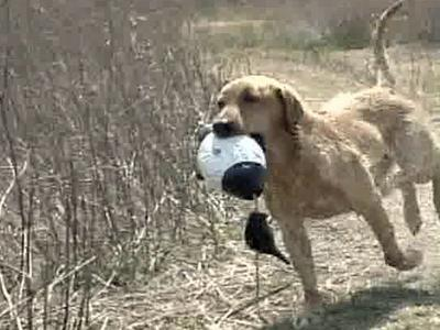 The Super Retriever Series is a hunting competition for retrievers and handlers.