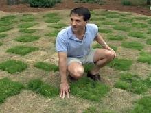 Cary Program to Pay Owners of Drought-Tolerant Grass