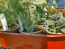 HerbFest Touts Drought-Tolerant Plants