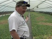 Lee County Farmer Victim of Crop Sabotage