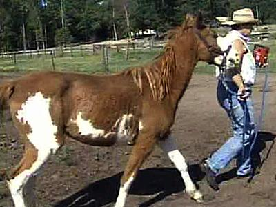 Authorities seized up to 20 horses, many with matted hair and protruding ribs, from a farm in Moore County.