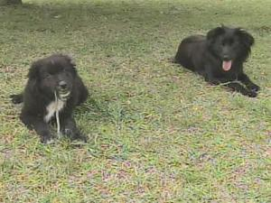 Dogs find human bones in Moore County