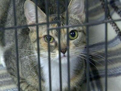 The SPCA of Wake County is at capacity as well as the Animal Protection Society of Durham.