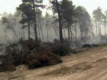 A wildfire burns the trees and peat in the Pocosin Lakes National Wildlife Refuge in Hyde County on June 12, 2008.
