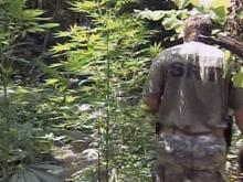 Harnett County deputies make another large pot bust