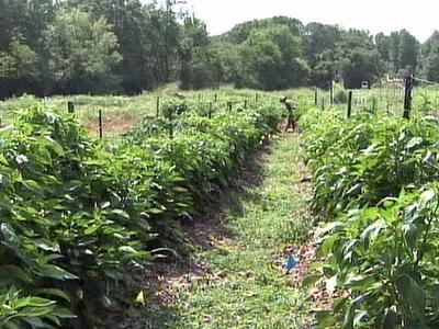Members of the Piedmont Biofuels Project grow their own food.