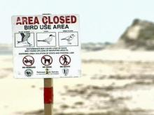 Are protected beaches keeping visitors from vacationing in N.C.?