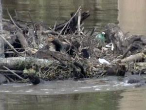 Whole trees, tires, basketball, coolers, mats of grass, trash and even a small boat are in the piles, caught under bridges between Fayetteville and the upstream town of Lillington.