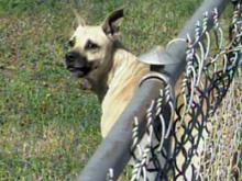 Fayetteville dog owner could face cruelty charges