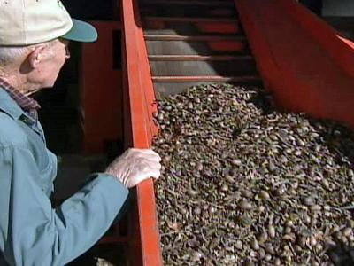 Billy Bunn is the president of the North Carolina Pecan Growers Association.