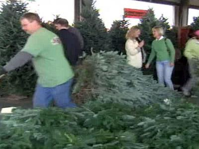Customers look at trees at the N.C. Farmer's Market.