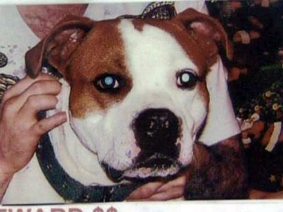 Linda Zoldy's 2-year-old pit bull, Duke, who went missing in January 2009.