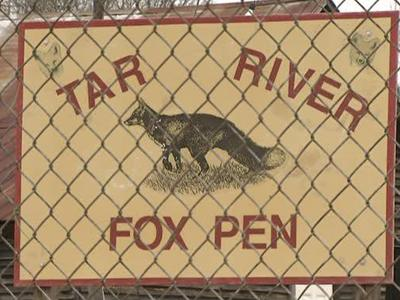 A bill in the General Assembly could ban a form of hunting called penning, which involves trapped animals, like foxes, in enclosed areas being hunted by dogs.