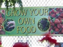 Economic problems lead to more gardeners