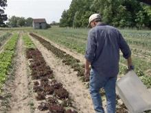 CSA farms can green your diet