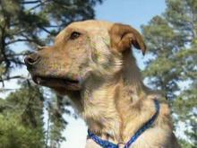 Dog survives brutal attack with machete