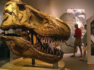 Visitors tour the North Carolina Museum of Natural Sciences in Raleigh.