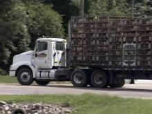 Chicken truck pulls into Mountaire Farms plant in Robeson County