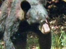 Durham residents recall bear sightings